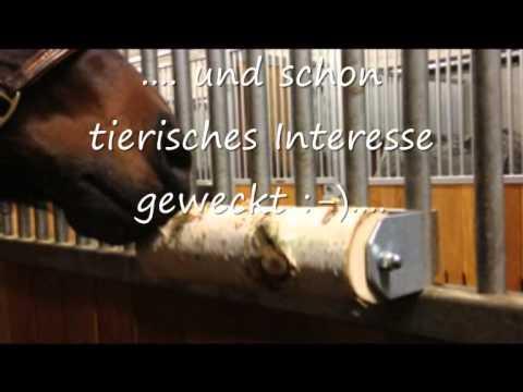 healthy horses pferdespass besch ftigung f r pferde. Black Bedroom Furniture Sets. Home Design Ideas