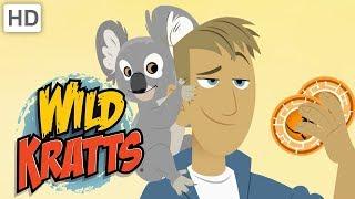 Wild Kratts 🐨 Kangaroos and Koalas | Kids Videos