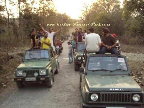 Corbett National Park Jeep Safari Elephant Safari - Wildlife Jungle Safari - Tiger Tracing Tour