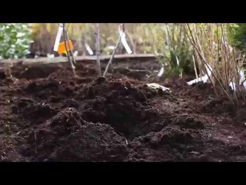 Porady Ogrodnicze: Co W Kwietniu W Ogrodzie?
