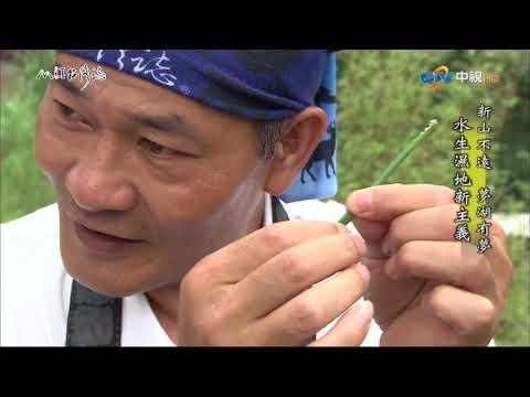 台灣-MIT台灣誌-EP 0633-新山不遠 夢湖有夢 水生濕地新主義