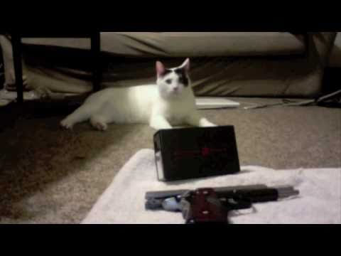 Crimson Trace Review by Picasso the Cat
