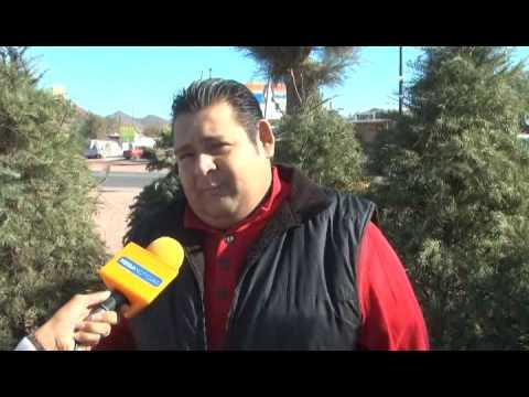 09 de Enero de 2015 Guaymas Centro de Acopio de pinos de navidad para reciclarlos