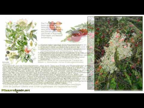 Heilpflanzen Heilkräuter Top-20 Mit Wirkung Und Anwendung