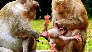 STOP ... STOP ... !! I'M SCARE ! Baby monkey Janna scare Tereza very much.
