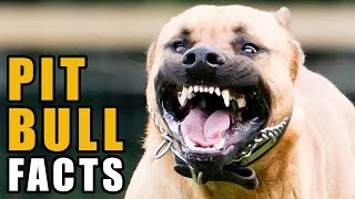6 Facts & Myths About Pit Bulls | Talkin Dogs List Show