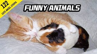 Funny animals video. I SWEAR you have NEVER EVER SEEN ANIMALS THAT FUNNY!! GET READY TO LAUGH!!