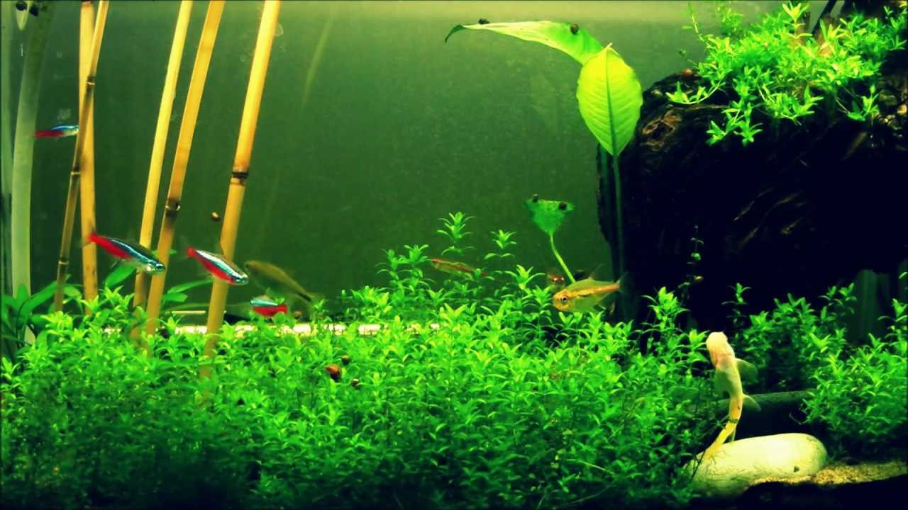Tetra fish tank youtube for Tetra fish tank