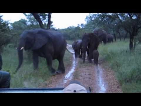 Africa Kapama Sobrosa