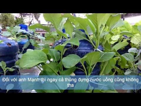Nông dân Đồng Nai trồng rau bằng đồng nát thumbnail