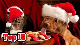 Top 10 Merry Facts About Christmas