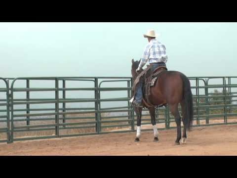 Leg Yield - Horse Training