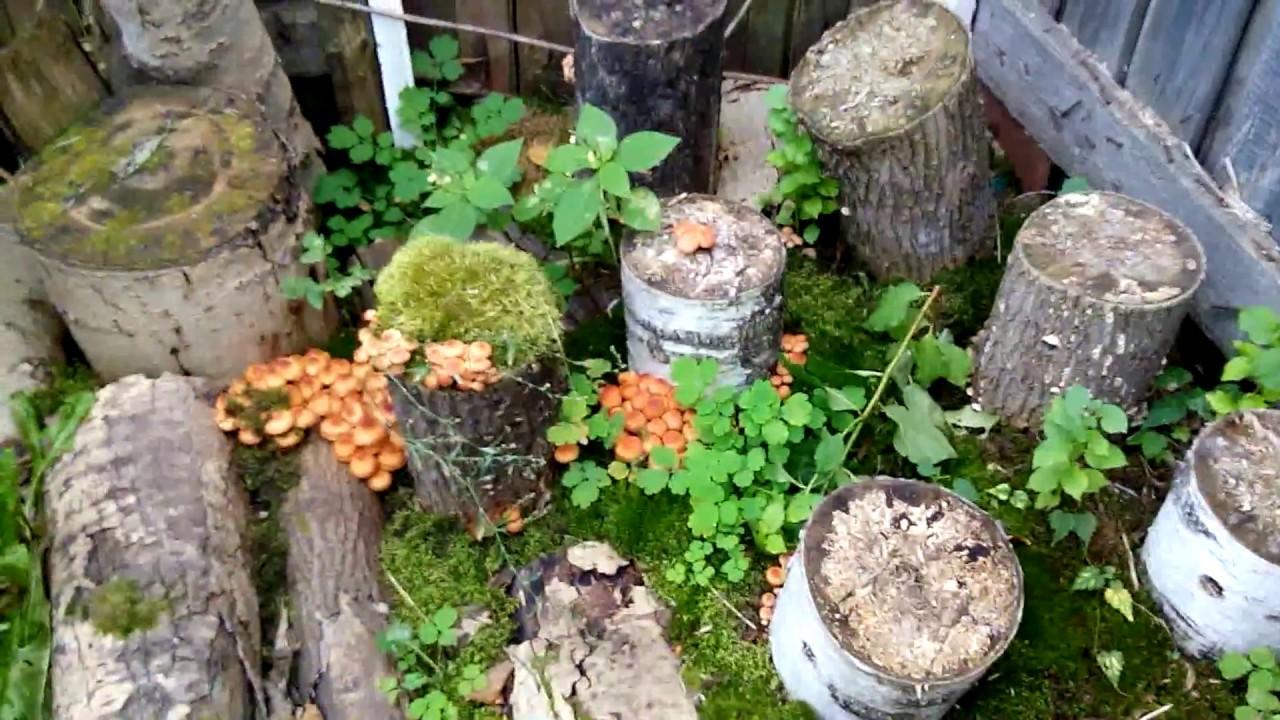 Выращивание грибов на садовом участке для новичков 5