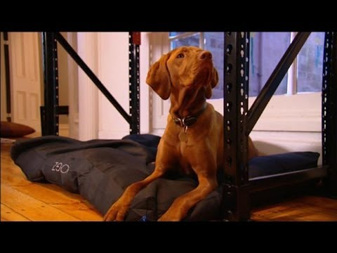 Dr Harry Rudi The Dog Ep 44 Youtube