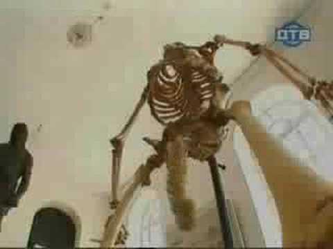 Se sperie de pula unui schelet