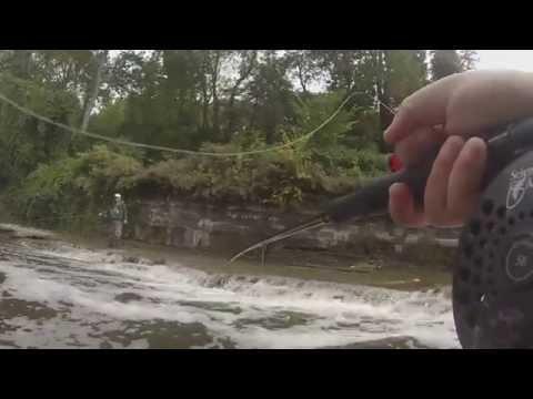 Steelhead Fishing Walnut Creek Erie Pa 10-4-2014