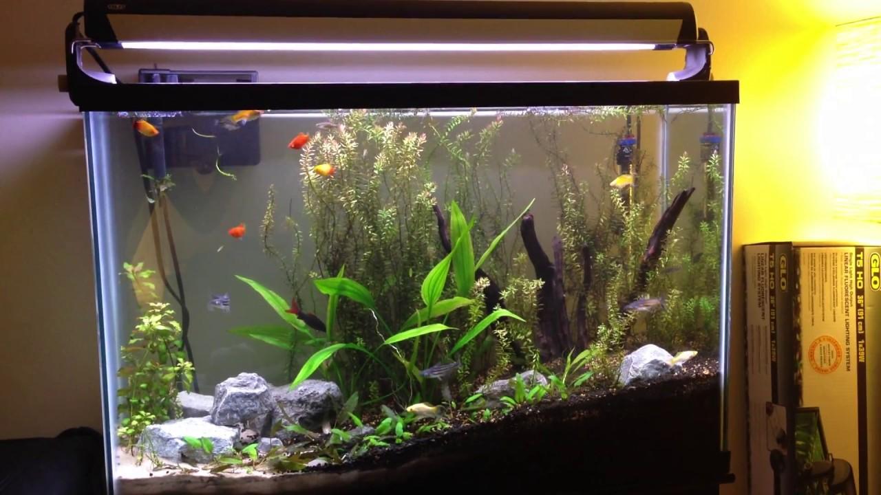New Aqueon 45 Gallon Community, Planted Tank - YouTube