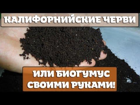 Как разводить и выращивать калифорнийских дождевых червей для получения биогумуса.