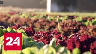 ООН внесла Украину в список голодающих стран - Россия 24