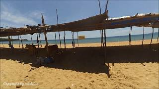 Đây có phải bãi biển dành riêng cho Bò? Chuyện lạ có thật