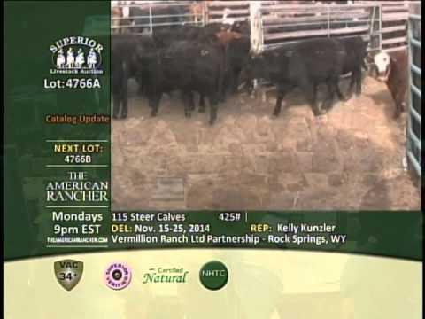 Superior Livestock Auction - 425# steers sell for $301