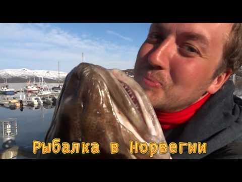 Треска 24 кг.Норвежская рыбалка в городе Тромсё. Апрель!