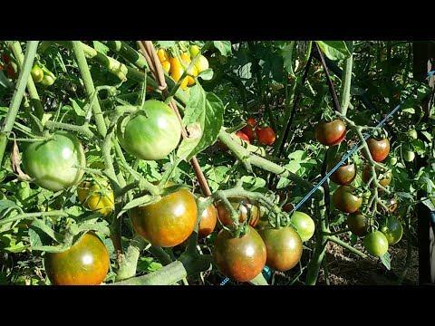 Проращивание семян в пеленке. Первые всходы.