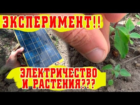 Электростимулятор роста саженцев своими руками (+ ФОТО)