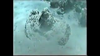 Kızıl Denizden Geçişin ve Mucizenin Ispatı (Arkeolojik Deliller -2-)