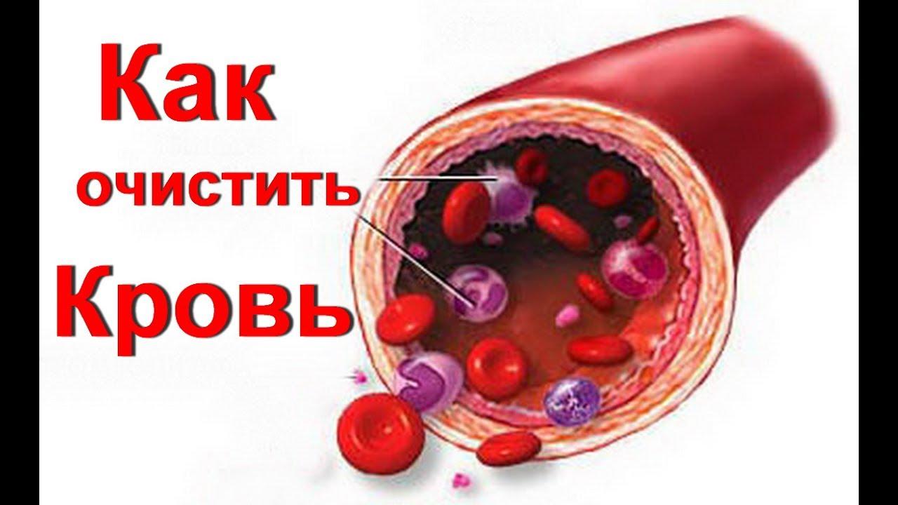 Как при домашних условиях почистить кровь 237