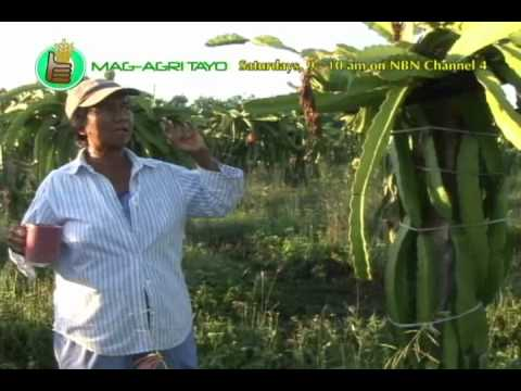 DOST-PCARRD: Dragon Fruit Production