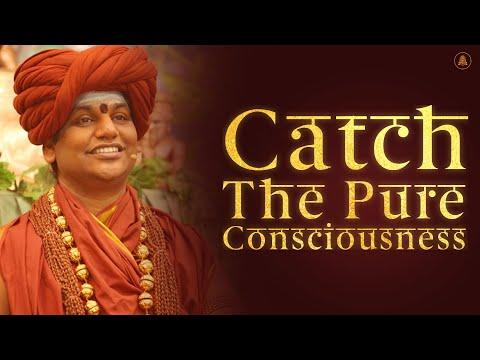 Catch The Pure Consciousness