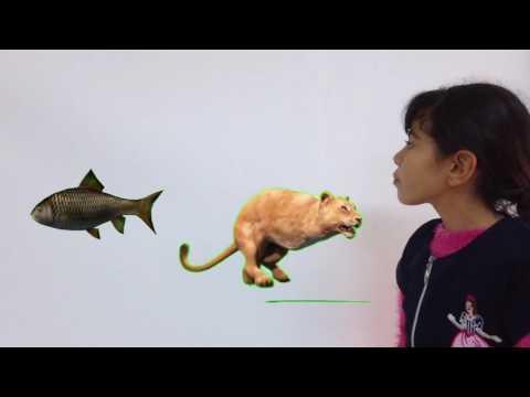 أنماط تنقل الحيوانات في أوساط مختلفة thumbnail