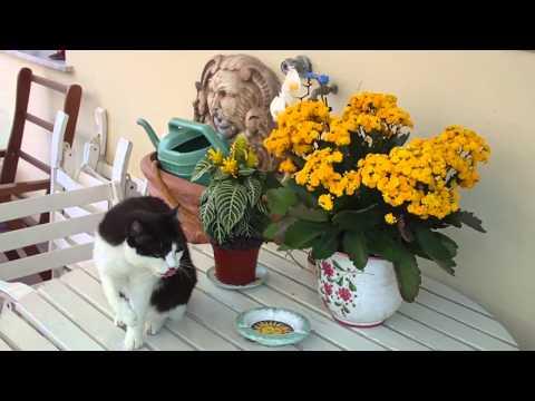 Clin,il mio gatto,si lecca – toshiba camileo s-20 720p test