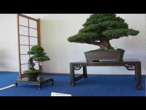 Satsuki Azalea Bonsai autumn exhibition / Kanuma Satsuki Association