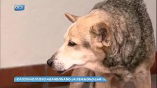Cão idoso abandonado em delegacia ganha novo lar