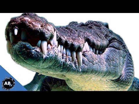 Swimming With 15 ft Croc! Wild Australia - Pt. 1 : SnakeBytesTV - Ep. 391 : AnimalBytesTV