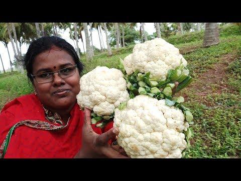 Cauliflower Manchurian Recipe / Cooking Gobi Manchurian in my farm /  Food Money Food