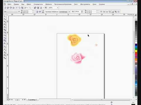 Нарисовать розу в корел