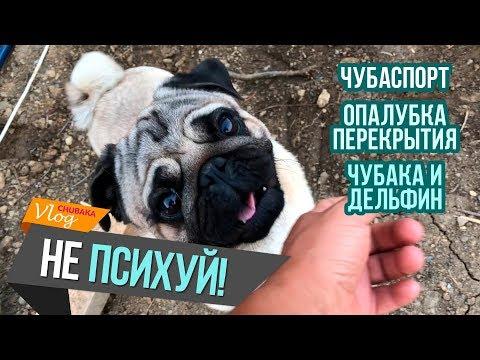 Виталя VS Глеб / Чубака и дельфин / Чубаспорт / ЧубаСтрой - строим дом в Крыму!