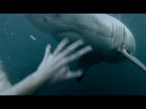 Close Call with a Great White Shark in Sydney Harbour! Filmed on a GoPro at Manly jump rock HOLY SH*T! Check out the next crazy video! http://www.youtube.com...