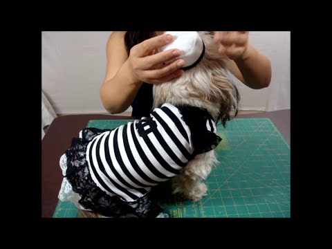 ✂ How to Make Easy Cute Prisoner Dog Halloween Costume, Homemade Pet Outfit Ideas  ♡