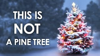 This Is Not A Pine Tree
