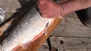 Так поморы солят сёмгу / Know how the local people of White sea area salt the salmon