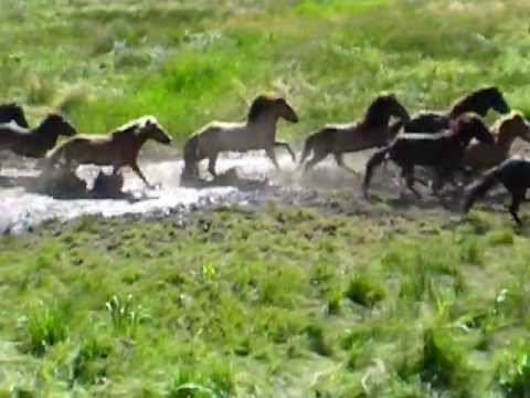 Wild Horses Running in the Wild!! so Pretty!!