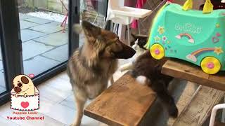 06 Funny And Cute German Shepherd Puppies Compilation #14