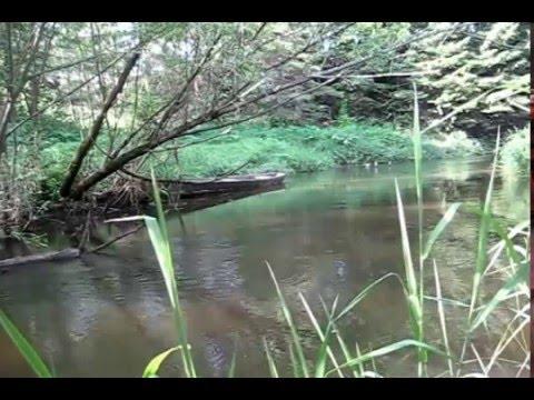 ловля в лесных ручьях видео