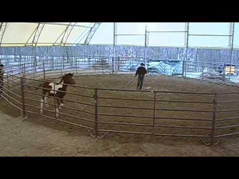 Day 1 -  SCEA Rescue Horse - Round Pen Training