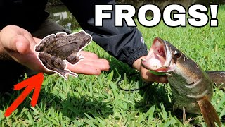 FISHING with FROGS for INVASIVE Snake Fish!