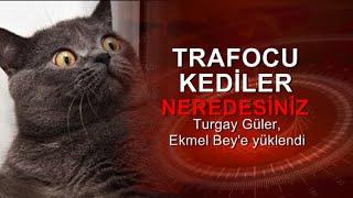 Turgay Güler : 'Trafocu kediler' Ekmel Bey sizi arıyor